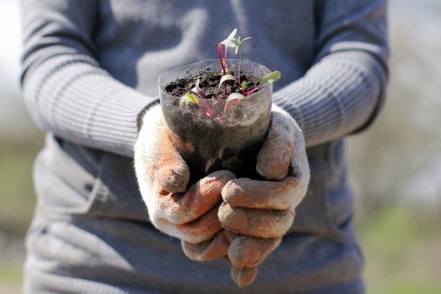 1. Gardener